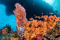 Anthias, Soft Corals, and Sea Fans under a natural arch<br /> <br /> Shot in Raja Ampat Marine Protected Area West Papua Province, Indonesia