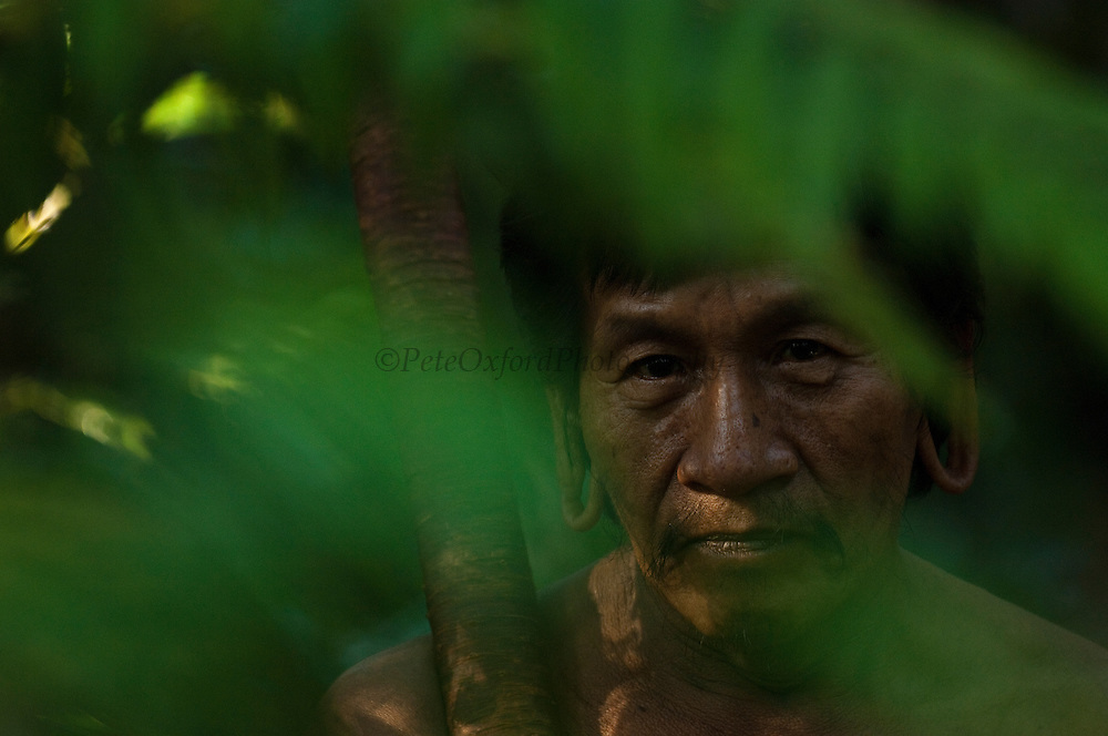 Huaorani Indian - Mipo Wira. Gabaro Community. Yasuni National Park. Amazon rainforest, ECUADOR.  South America<br /> Mipo has the tradition large ear lobes and wears balsa ear plugs on occasion.<br /> This Indian tribe were basically uncontacted until 1956 when missionaries from the Summer Institute of Linguistics made contact with them. However there are still some groups from the tribe that remain uncontacted.  They are known as the Tagaeri. Traditionally these Indians were very hostile and killed many people who tried to enter into their territory. Their territory is in the Yasuni National Park which is now also being exploited for oil.