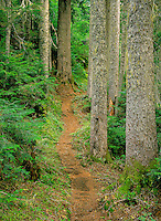 Mt. Baker Wilderness Area, WA, USA.Old Growth Forest and Trail..Keep Kool Trail to Yellow Aster Butte..©2000 Brett Baunton