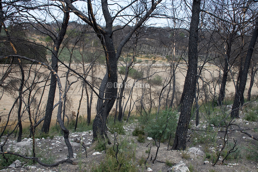 a recent bush fire that contains some new growth