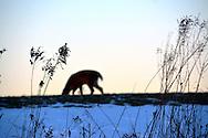 Deer, animals, nature, ohio