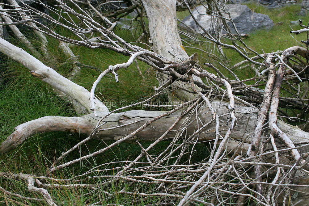 Deadwood branches on Inis Oirr the Aran Islands Galway Ireland