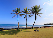 Three coconut palm tree, Hauula, Windward, Oahu, Hawaii