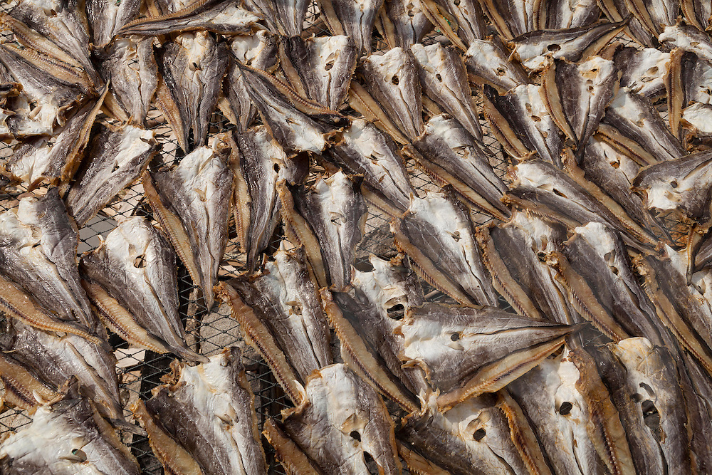 Close up of fish drying near sea shore in Can Gio, Vietnam, Asia
