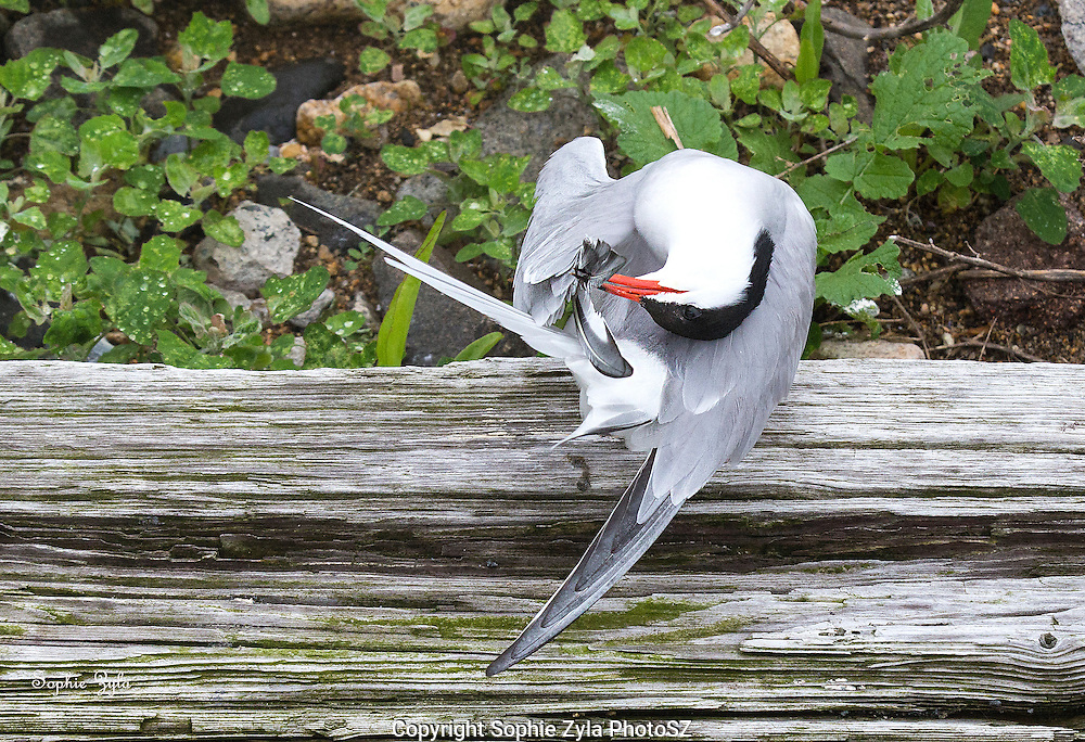 Common Tern Yoga Moves