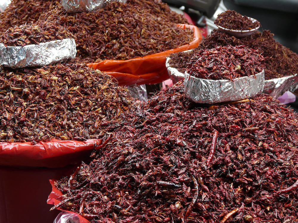 EN&gt; Fried crickets, a local snack in Oaxaca | <br /> SP&gt; Chapulines, antojitos locales en Oaxaca