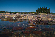 Lower Negro Island in the Bagaduce River, Castine, Maine, US