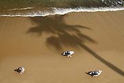 Palm Tree Shadow on the Beach