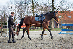 Kenis Pieter (BEL) - Donna Z <br /> Stal De Klundert - Beerse 2013<br /> © Dirk Caremans