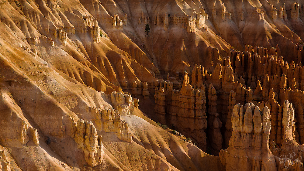 Bryce Canyon's alluring spire sculptures and softly eroded canyon walls covered in a golden glow from the early morning light.