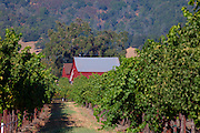 Red barn in vineyard in Napa Valley, CA