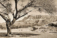 Acacia tree and Jebel Kissane Mountain in the Draa Valley, Morocco.