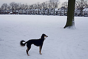 A dog pauses to listen to its owner during a snow-bound walk in Ruskin Park, Lambeth.