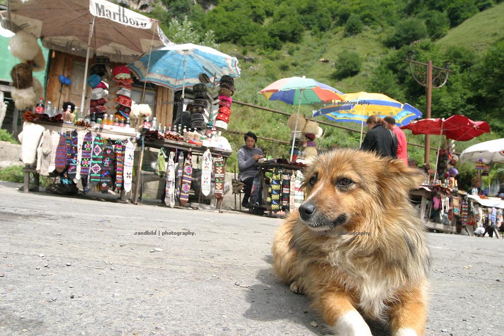 An der Georgischen Heerstrasse bei Gudauri liegt ein Hund vor den Verkaufsstaenden der Frauen, die selbstgestrickte Socken und  Muetzen anbieten...Shopping mall caucasian style beside the Georgian Military Highway.