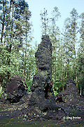 lava tree, formed when hot lava surrounds a living tree, then cools and hardens, leaving a mold around the trunk when the lava drains away, Puna,  Hawaii Island, USA