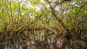 Florida Landscapes Part 3