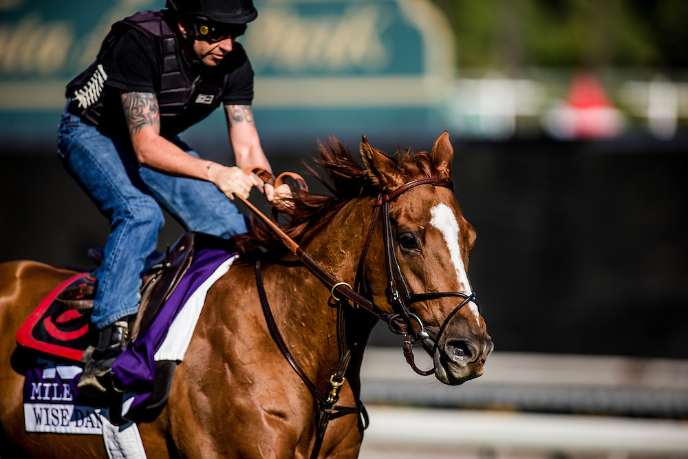 Wise Dan trains for the Breeders' Cup Mile at Santa Anita Park in Arcadia, California on October 31, 2013. (Alex Evers/ Eclipse Sportswire)