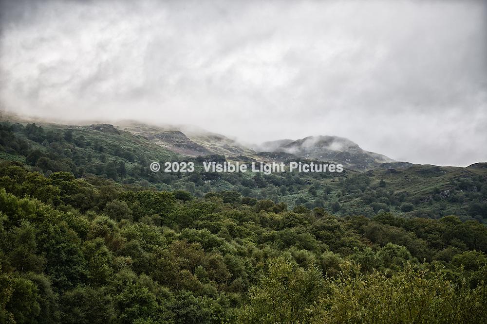 A hillside along Firkin Point, on Lock Lomond.