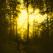 moody forest scene after rain fall - yellow tinted photograph