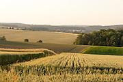 Landschaft, Felder bei Bödigheim, Odenwald, Baden-Württemberg, Deutschland   Country side, farmland in Bödigheim, Odenwald, Baden-Württemberg, Germany