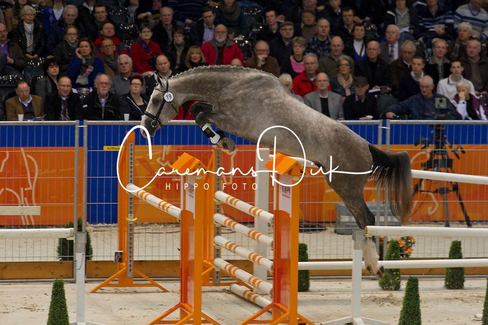 019 - Exeter<br /> KWPN Hengstenkeuring - 's Hertogenbosch 2012<br /> © Dirk Caremans