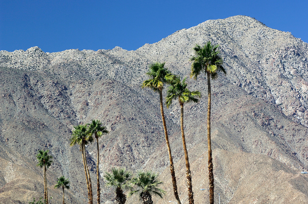 Palm Trees at Anza Borrego Desert State Park,  California, United States of America