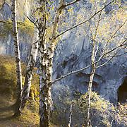 Autumn birches, Hodge close quarry, Cumbria