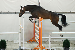 071, Hyacintha Chin<br /> Vrijspringen Nationale Merriekeuring, 3 jarige springmerries <br /> KWPN Paardendagen Ermelo 2015<br /> © Hippo Foto - Dirk Caremans