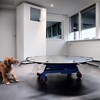 Nederland, Amstelveen , 24 maart 2015.<br /> KNGF Geleidehonden start in samenwerking met het VU Medisch Centrum een experiment om darmkanker vroegtijdig op te sporen door medische detectiehonden.<br /> De nieuwekankerdetectiemethode kan bijdragen aan verdere wetenschappelijke ontwikkelingvan de vroege diagnose van darmkanker.<br /> Honden staan bekend om hun sterke reukvermogen. KNGF Geleidehonden is daarom begonnen met de training van cocker spaniels die speciaal geselecteerd zijn op hun ruiktalent.De honden worden getraind met ontlastingmonsters van patiënten.<br /> De resultaten kunnen een doorbraak betekenen,want hoe eerder kanker bij een patiënt wordt ontdekt, hoe groter de kans is op herstel.<br /> Op de foto: een KNGF hond tidjens de training in het opsporen van de juiste sample met darmkankercellen in KNGF instituut vindt het correcte buisje.<br /> Foto:Jean-Pierre Jans