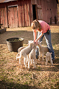 Juniper Cosner helps take care of the animals, like these lamb, from Upper Dry Creek Ranch.