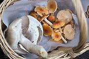 Snøballsjampinjong (Knölchampinjon, Agaricus silvicola, Wood Mushrooms) og engvokssopp, Hygrocybe pratensis.