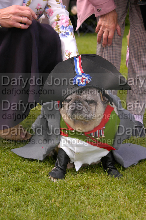 Oscar dressed as Napoleon in the Fancy Dress competition. Pam George Taylor nearby. Pug Dog club Tea party held at Cottesbrook Hall.  ( home of  Mr. and Mrs. Alastair Macdonald-Buchanan ) 26 June 2005. . ONE TIME USE ONLY - DO NOT ARCHIVE  © Copyright Photograph by Dafydd Jones 66 Stockwell Park Rd. London SW9 0DA Tel 020 7733 0108 www.dafjones.com