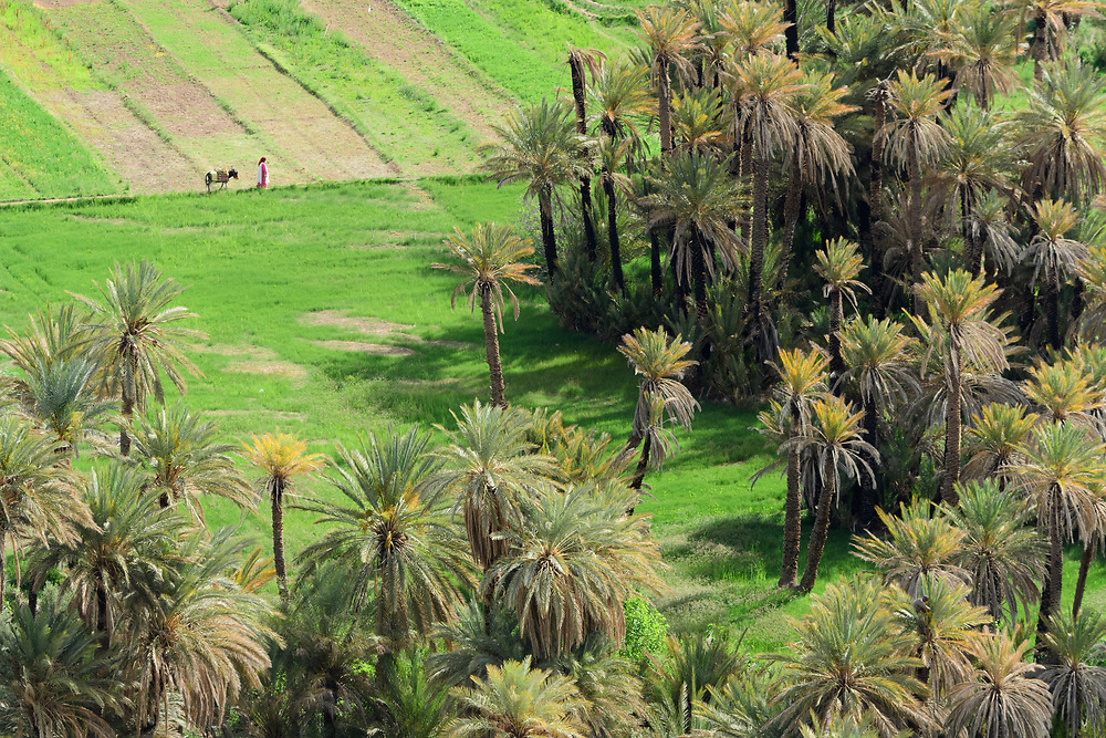 North Africa, Africa, African, Morocco, Moroccan, palm oasis near Tinghir