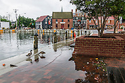 "Annapolis, Maryland - June 05, 2016: Ducks search for a morning snack among the water and detritus flooding in to the Kunta Kinte-Alex Haley Memorial park located at the City Dock in historic Annapolis early Sunday morning June 5th, 2016. A perigean spring tide brings some of the highest tides of the year, which can create nuisance flooding in coastal towns like Annapolis.<br /> <br /> <br /> A perigean spring tide brings nuisance flooding to Annapolis, Md. These phenomena -- colloquially know as a ""King Tides"" -- happen three to four times a year and create the highest tides for coastal areas, except when storms aren't a factor. Annapolis is extremely susceptible to nuisance flooding anyway, but the amount of nuisance flooding has skyrocketed in the last ten years. Scientists point to climate change for this uptick. <br /> <br /> <br /> CREDIT: Matt Roth for The New York Times<br /> Assignment ID: 30191272A"