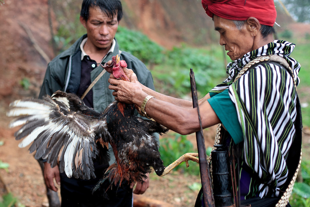 Two Christian Catholic men tries to kill a rooster during a special ceremony where they offer an animal sacrifice to Jesus Christ to chase away bad spirits in Mindat, Chin state, Myanmar, Friday, 31 May 2013. Chin Christian Catholic people mix their ancient pagan practices with the Christian faith.