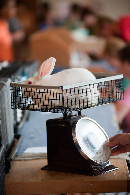 Bunny being weighed at the Maryland State Fair