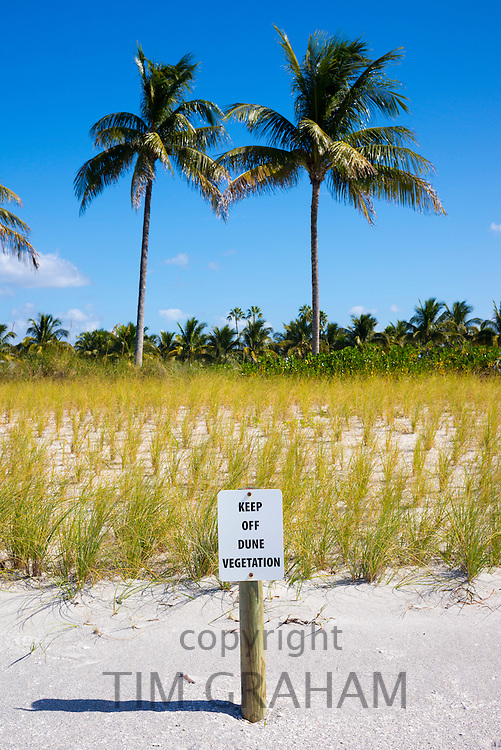 Newly planted dune grass at South Seas Island Resort on Captiva Island in Florida, USA