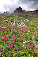 Indian Paintbrush in full bloom along the Ice Lakes Trail in Colorado