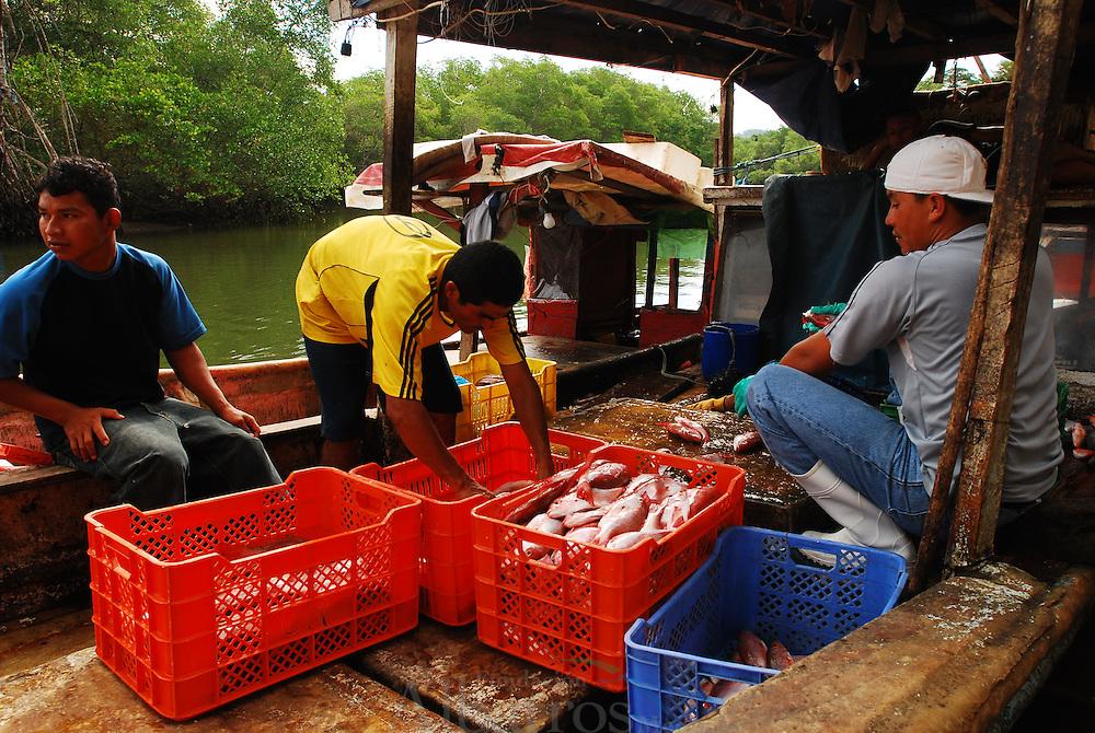 Pesca en el Puerto de Remedios. Chiriquí, Panamá.<br /> <br /> © Alejandro Balaguer/ Fundación Albatros Media.