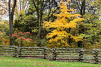 Oak Trees in Fall at the Bernheim Arboretum, Clermont, Kentucky