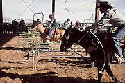 The New Mexico Businessman's Team Roping Association meet for a 3 day roping event at the Southern New Mexico Fairground  set in the desert outside Las Cruses.  An average of 400 teams per roping compete in pairs on horseback, to lasso a succession of young bulls which are released from a trap. Ropings attract both male and female members and spectators from beyond NM state in neighbouring Texas and Arizona.