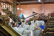 Tea leaves drying and grading in factory at Sabah Tea Plantation, Ranau