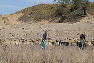 Roma  August  25 2008.I pastori romeni colleghi dei due arrestai per le violenze alla coppia di turisti olandesi pascolano con le pecore vicino al casolare  luogo dell'aggresione.The shepherds Romanian colleague of the two I arrested for the violences to the couple of Dutch tourists they pasture with the sheep next to the farm place of the aggression