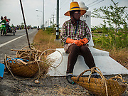 22 FEBRUARY 2017 - BAN LAEM, PETCHABURI, THAILAND: A salt worker waits for a ride after a morning in the salt fields during the salt harvest in Petchaburi province of Thailand, about two hours south of Bangkok on the Gulf of Siam. Salt is collected in coastal flats that are flooded with sea water. The water evaporates and leaves the salt in large pans. Coastal provinces south of Bangkok used to be dotted with salt farms, but industrial development has pushed the salt farms down to remote parts of Petchaburi province. The harvest normally starts in early February and lasts until early May, but this year's harvest was delayed by a couple of weeks because of unseasonable rain in January that flooded many of the salt collection ponds.    PHOTO BY JACK KURTZ