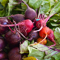 Chiogga, golden and red beets at a farmers' market