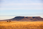 Horses grazing near Square Butte in central Montana.