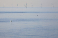 Wind farm in ocean