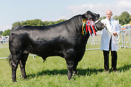 The Angus Show, Brechin, Saturday 8th June, 2013. Aberdeen Angus champ from T Rennie