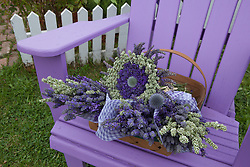 North America, United States, Washington, Sequim, bouquets of dried lavenderon purple chair at Lavender Festival, held annually each July