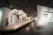 Tiere im Krieg, Militärhistorisches Museum innen (umgebaut von Liebeskind), Neustadt, Dresden, Sachsen, Deutschland | animals in war, interior of Military Museum (rebuilt by Liebeskind), Neustadt, Dresden, Saxony, Germany,